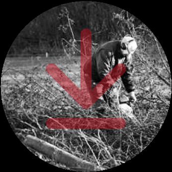 BOND-repository_netherlands_Northern-Friesian-Woodlands-Association